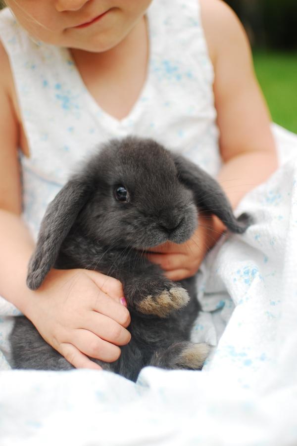 rabbit 029